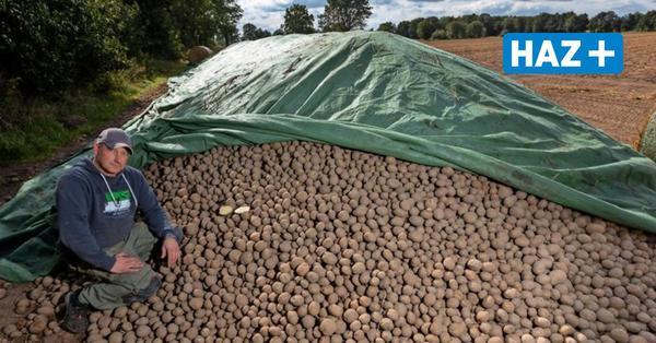 Hannover: Wegen Corona landen Tausende Tonnen Kartoffeln in der Biogasanlage