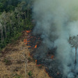 The Amazon is burning: No to EU-MERCOSUR trade deal!