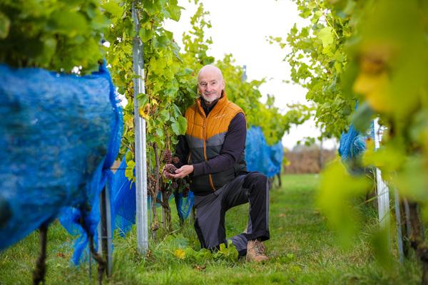 Winzer im Glück: So gut wächst der Wein am Sund