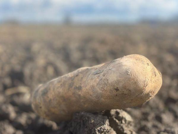 Les producteurs de pommes de terre sont en grande difficulté - Aardappeltelers zitten fors in de problemen