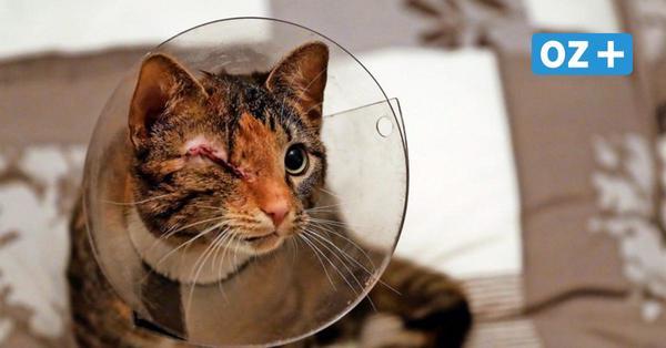 Mit abgetrennten Beinen nach Hause gequält: Werden Katzen in Bad Doberan misshandelt?