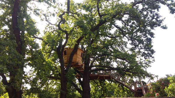 Die Baumplattform der Auwaldstation. Foto: Lisa Schliep