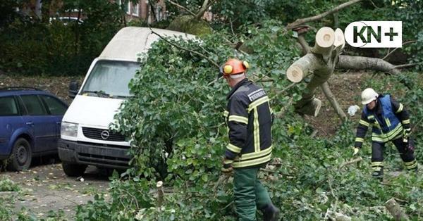 Baum stürzt in Kiel auf sechs Autos in der Medusastraße