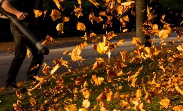 Laub sorgt nicht nur für Herbststimmung, sondern auch für Arbeit, wenn es um die Entsorgung geht. Foto: dpa