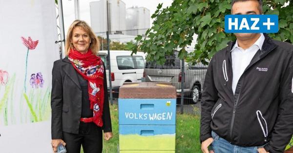VW-Honig aus Hannover: Emsige Bienen in Stöcken am Werk