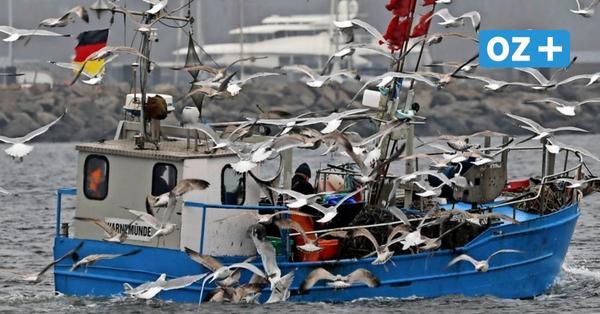 Warum Küstenfischer in MV von der Abwrackprämie für Kutter nichts halten