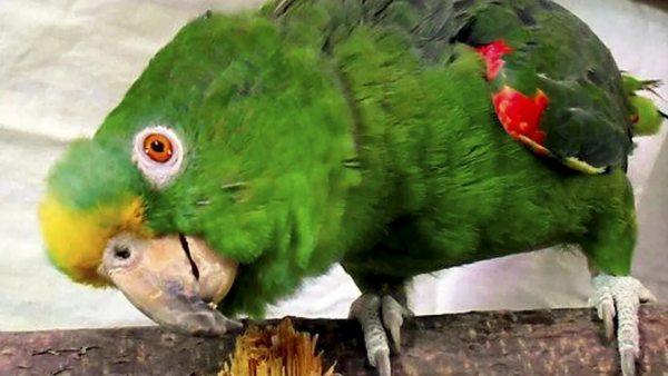 Wegen Corona: Immer mehr Briten wollen ihre Vögel loswerden