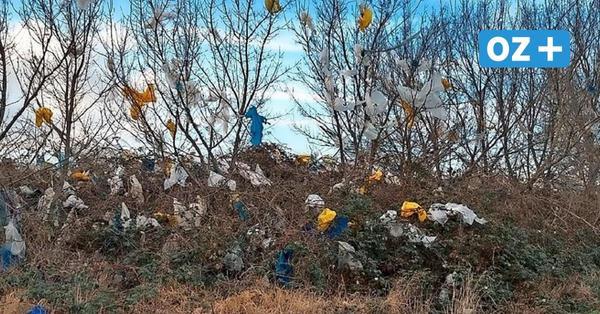 Felder und Graben bei Parkentin voll mit Plastikmüll: So will Alba das Problem lösen