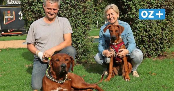 Angst um Aslan: Warum erst ein Londoner Tierarzt dem Hund aus Wittenbeck helfen konnte