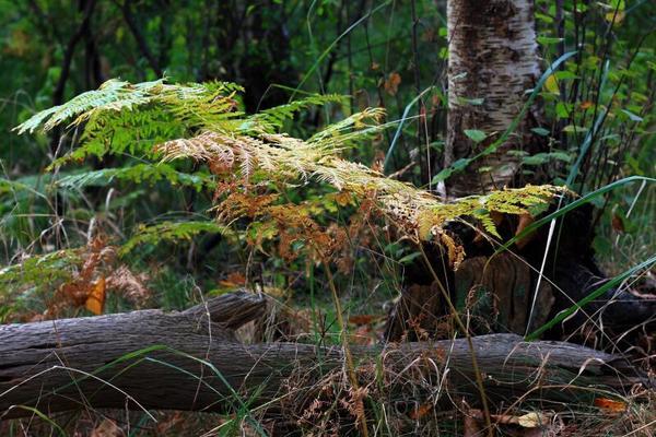 Herbst (Foto: Ingo Krummheuer)