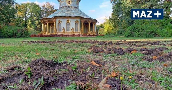 Wildschweine verwüsten den Park Sanssouci