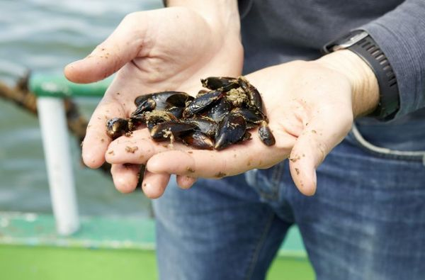 La ferme maritime au large de Nieuwpoort n'est pas encore sûre - Zeeboerderij voor kust Nieuwpoort nog niet zeker