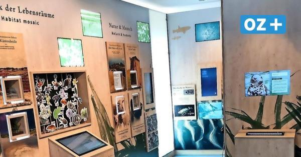 Virtueller Tauchgang und Flug: Neue Ausstellung im Nationalparkhaus auf Hiddensee