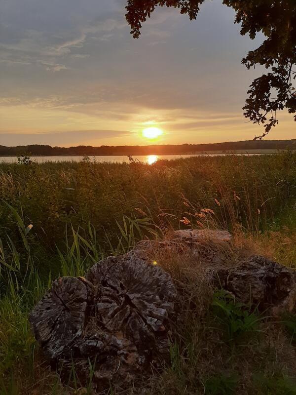 Abendstimmung am Wreechener See (Foto: Cindy Bryja)
