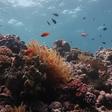 Studie: Great Barrier Reef hat innerhalb von 25 Jahren die Hälfte seiner Korallen verloren