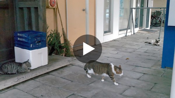 【4K】Walking to sunset at Tateyama, Chiba - slow cat