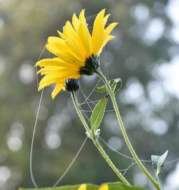 Herbstzauber (Foto: Anne Schönemann)