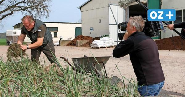 Zu Besuch auf Poel und in Sandhagen: EU-Abgeordneter interessiert an Seegras-Verwertung