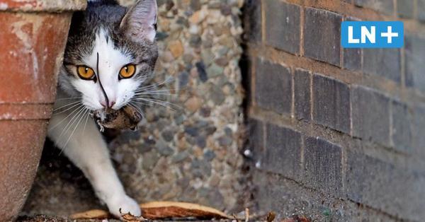 Kreis Stormarn: Hier können Straßenkatzen kostenlos kastriert werden