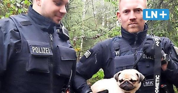B206 Bockhorn: Bundespolizisten retten Mops und bringen ihn ins Tierheim