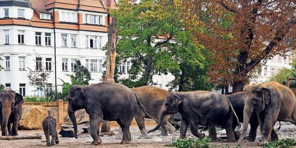 Wildes Durcheinander: So lief die Vereinigung der Elefantenherde
