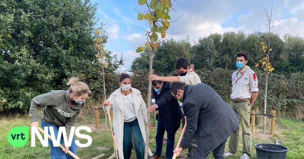 La Flandre veut planter 4.000 ha de bois, avec l'aide d'entreprises et d'associations - Vlaanderen wil 4.000 hectare bos planten met hulp van bedrijven en verenigingen