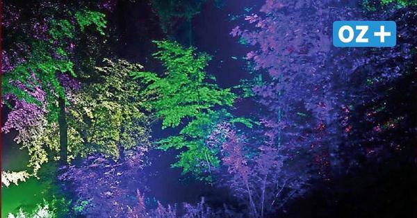 Farbenmeer beim Lichtzauber im Ückeritzer Wald