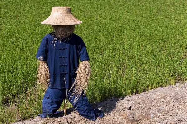 Vogelscheuche auf einem Reisfeld in Thailand
