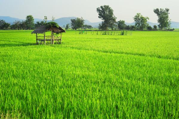 Reis. Nicht nur lecker, sondern auch schön anzusehen...