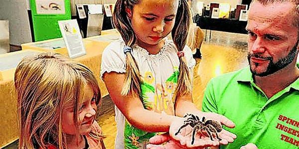 Größte Vogelspinnen der Welt in Wismarer Markthalle zu sehen – OZ verlost Karten