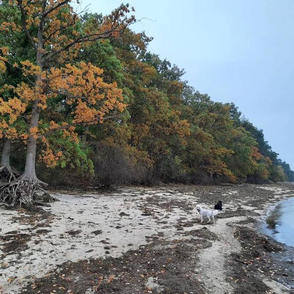 Herbststille am Greifswalder Bodden (Foto: Kathrin Müller)