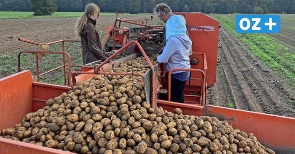 So bringt ein Gresenhorster Landwirt heimische Kartoffeln an den Verbraucher