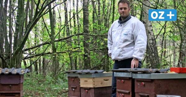 Hobby-Imker aus Leyerhof setzt auf hochwertigen Honig unter strengster Kontrolle