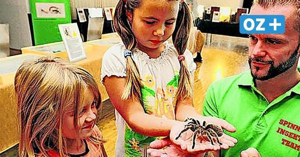 Größte Vogelspinnen der Welt in Wismarer Markthalle zu sehen