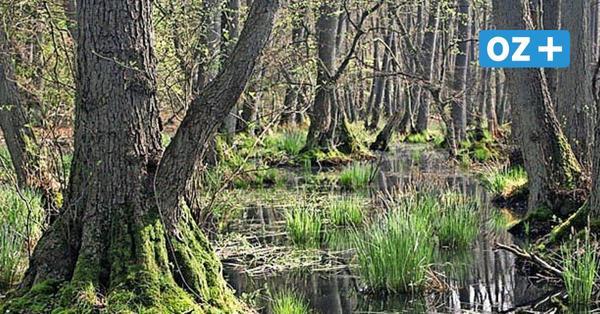 Endspurt: Schönstes Foto aus Nordvorpommerns Wald gesucht