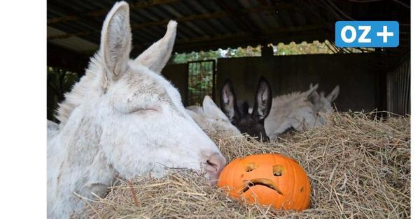 Halloween im Stralsunder Zoo fällt wegen Corona aus