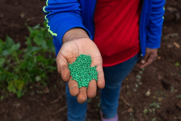 A woman shows radish seeds that she sows in a vegetable garden where men and women work. Santa Elena, La Paz, Honduras October 21, 2020. Photo: Martín Cálix from his photogallery on women campesinas (click on image).