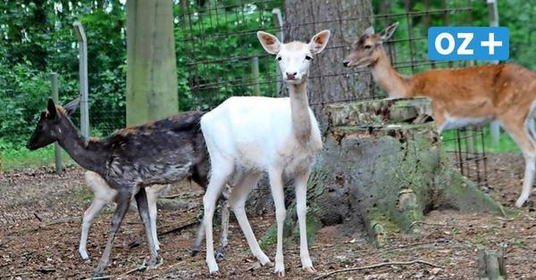 Tierpark Wolgast hat trotz Lockdown weiter geöffnet