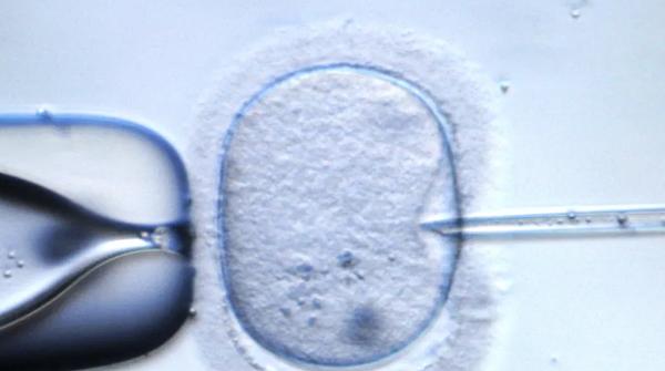Grundsatzurteil:Transfer von Eizellenspenden im Vorkernstadium verboten