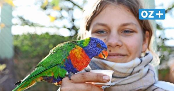Zoo Rostock und Vogelpark Marlow im Lockdown auf: Wie voll ist es?