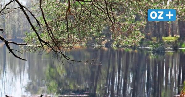 Ribnitz: Exkursion durch eine spannende Moorlandschaft