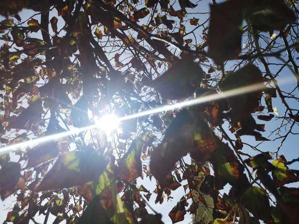 Herbst von seiner schönsten Seite (Foto: Ulrike Harmel)