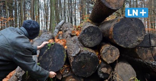 Eutin: Holzdiebe stehlen Eichenstämme im Dodauer Forst