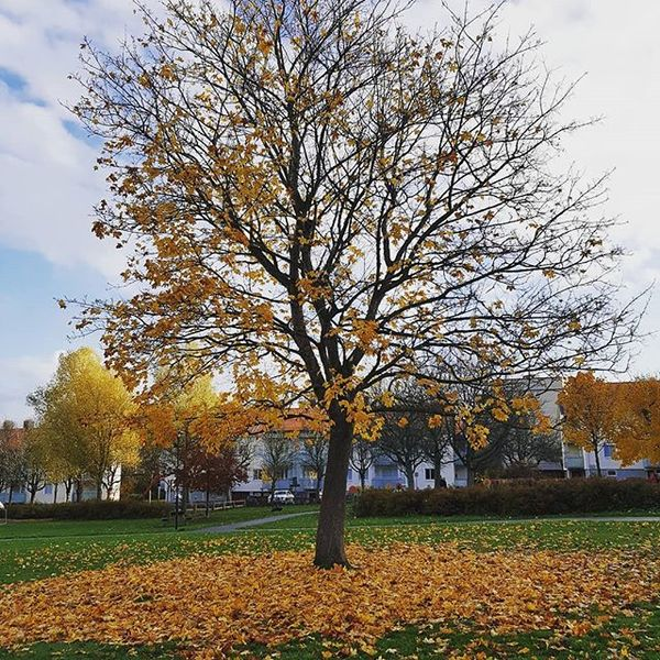 The fallen (Leaves in the #colorofautumn