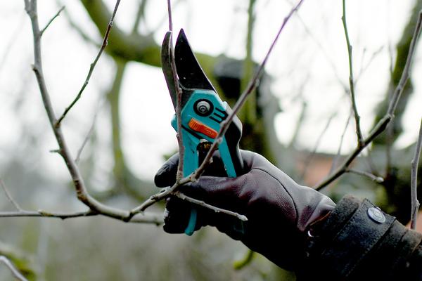 Laubbäume können problemlos im Herbst geschnitten werden, Obstgehölze lieber erst später. Foto: Britta Pedersen/dpa