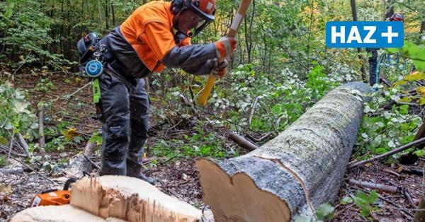Stadt will 874 Bäume fällen - und dreimal so viele nachpflanzen