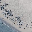 Zahl der Seehunde im Wattenmeer: Experten beobachten Höchststand