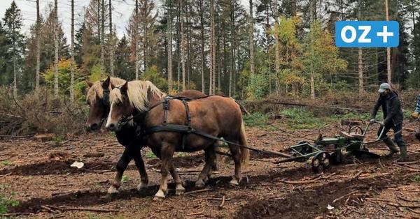 Forstamt Poggendorf: So schonen Hans und Edda den Wald
