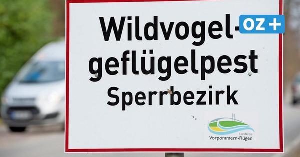 Zingst: Erster Vogelgrippe-Ausbruch in Haustierbestand in MV