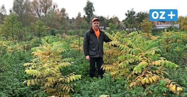Trotz Corona: Pflanzaktion in Neuburg am 14. und 15. November darf stattfinden